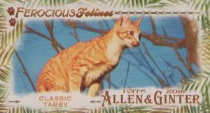 Ferocious Feline Tabby